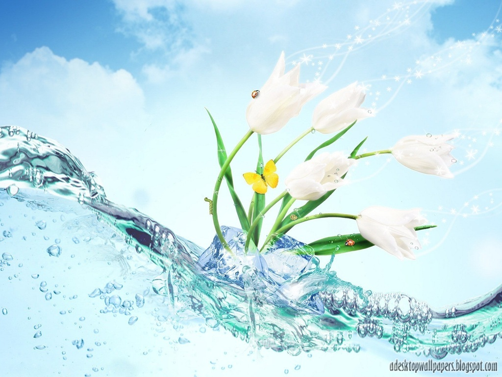 Water and Flowers Desktop Backgrounds picture wallpaper (1024 x 768 )