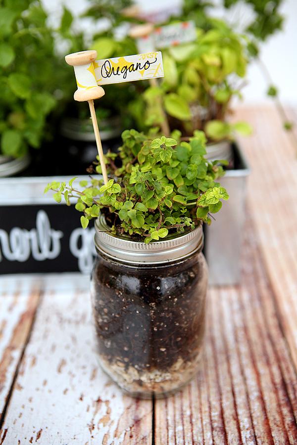 http://4.bp.blogspot.com/-lgJ0gilI9Yk/U8RfYVs0ppI/AAAAAAAATi4/FlfC0FOZkBI/s1600/mason+jar+herb+garden.jpg