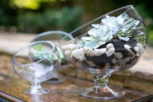 Accent Decor Terrariums with Bias Bowls