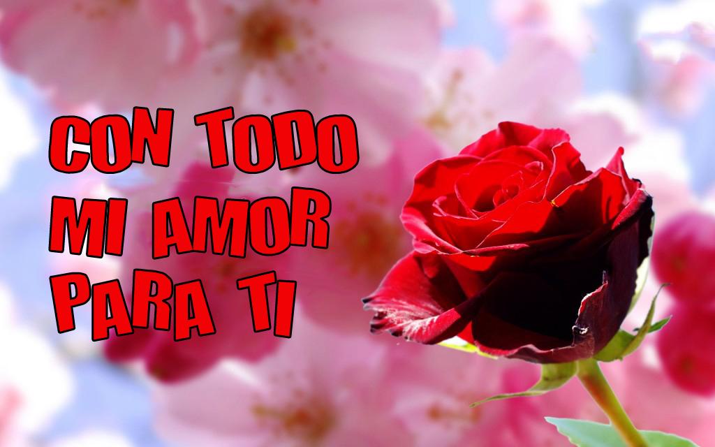 Solo Imagenes, Frases, Fotos y Carteles de Amor ∞ - Flores