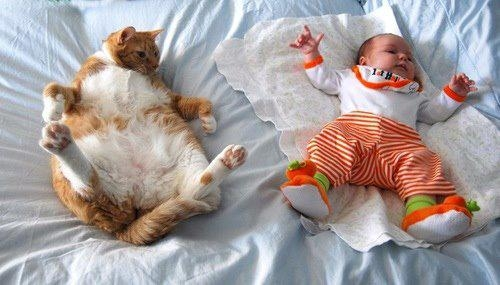 Cat and Baby How Cute