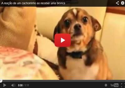 A reação de um cachorrinho ao receber uma bronca