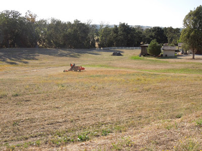 Man Mowing Land in Peterson Ranch,© B. Radisavljevic