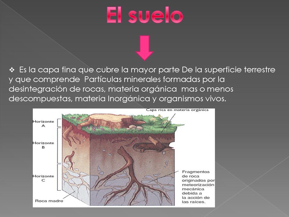 Segundo bioqu mica nydia sanchez for Como estan formados los suelos