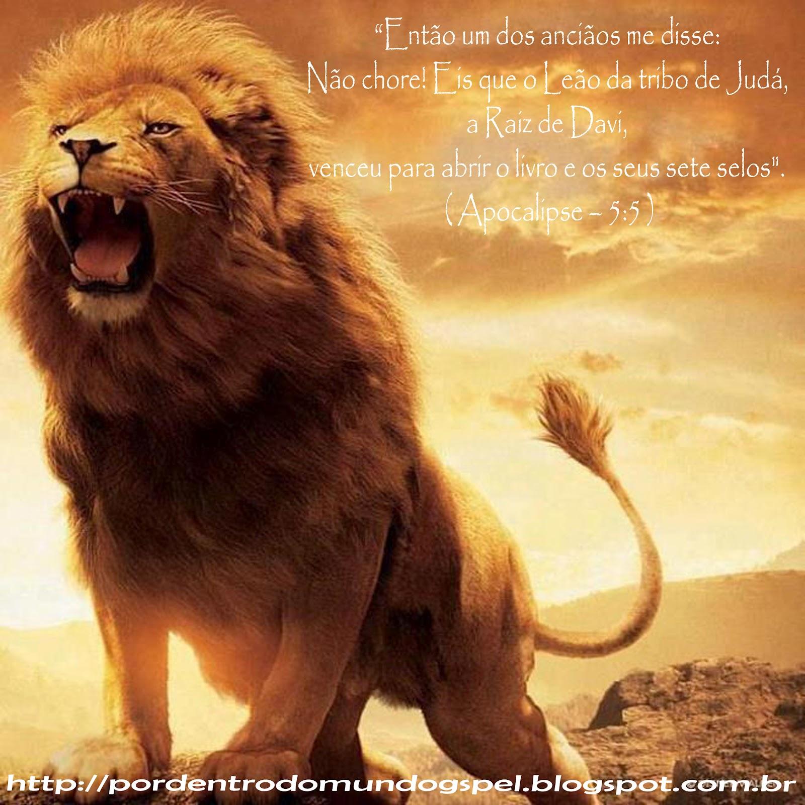 Rey leon 2 1080p latino dating 7