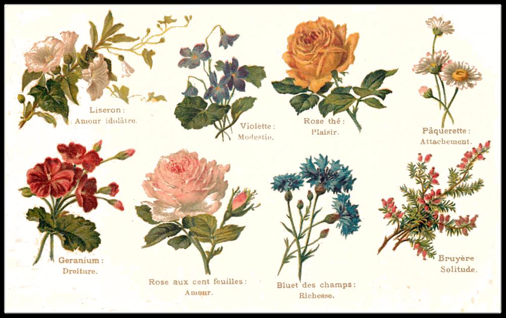 H raldie le langage des fleurs - Langage des fleurs amitie ...