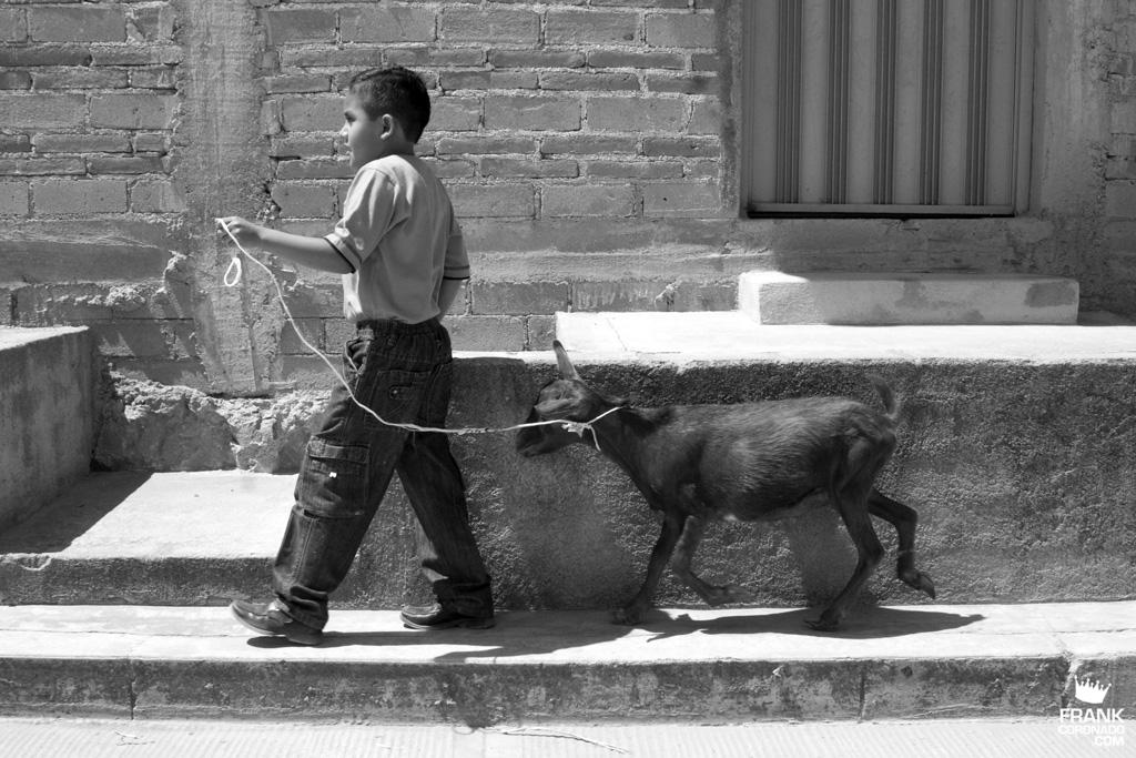 niño con cabra