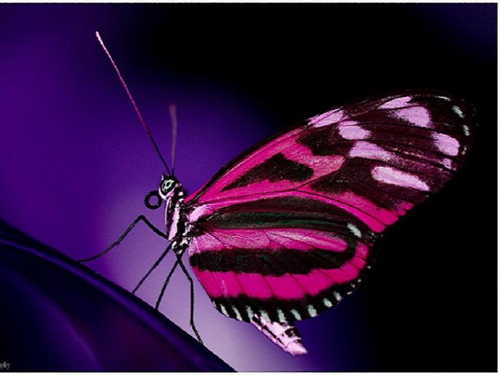 Funny Animated Butterfly Wallpaper