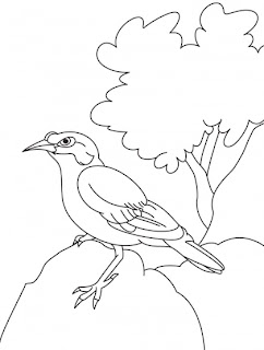 Penguin Connect The Dots Coloring Pages