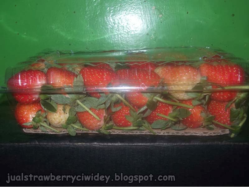 jual strawberry pack jumbo samping