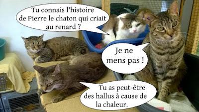 Quatre chats et remake de Pierre et le loup.