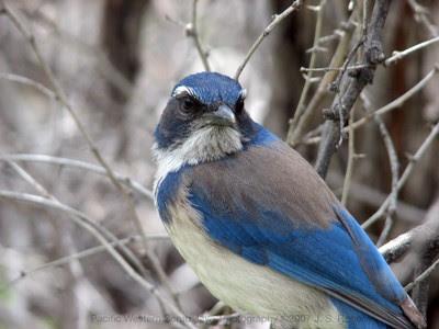 Burung Ini Mampu Mengetahui Kapan Ajal Datang