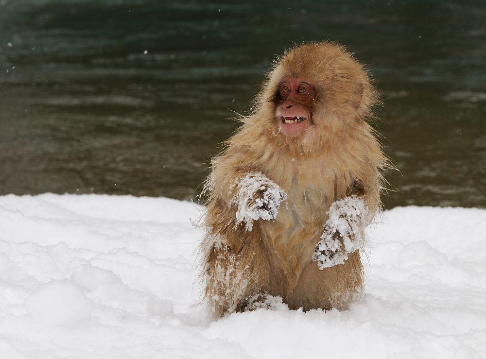 8. Snow Fun