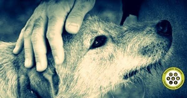 ΟΧΙ στην ευθανασία αδέσποτων ζώων | No to euthanasia of stray animals