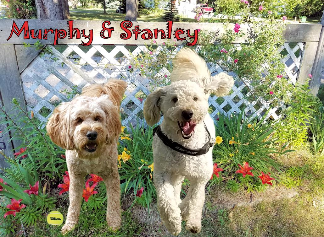 Murphy & Stanley