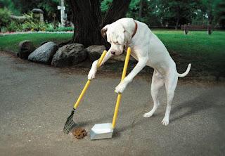 Cão Super asseado