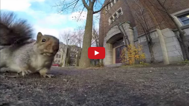 Squirrel Steals GoPro Camera, Runs Up Tree, Becomes Internet Celebrity