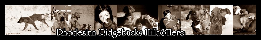 Rhodesian Ridgebacks Hilla ja Hero