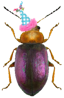 A cockroach wearing a party hat.