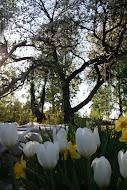 Tryck på bilden för att få en rundtur i främre trädgården.
