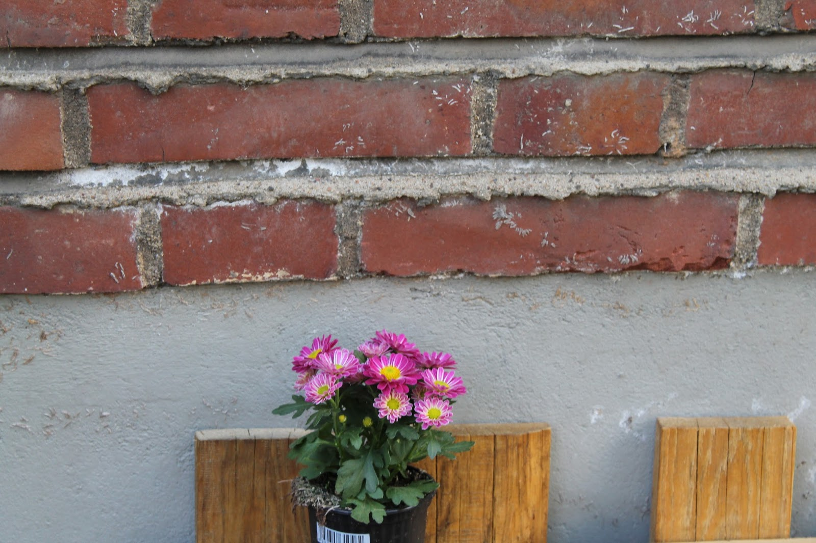 Blumen im Palettenregal und Backsteinwand