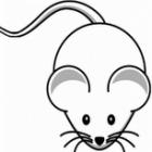 Friedensforschung mit der Maus