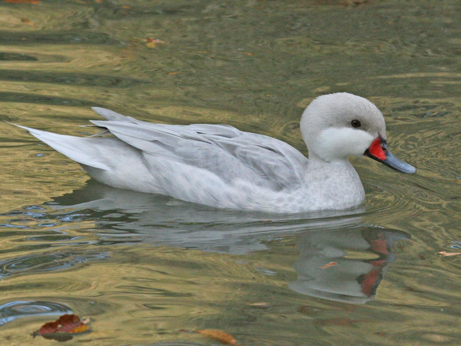 Animals World: latest videos of animal white cheeked ...