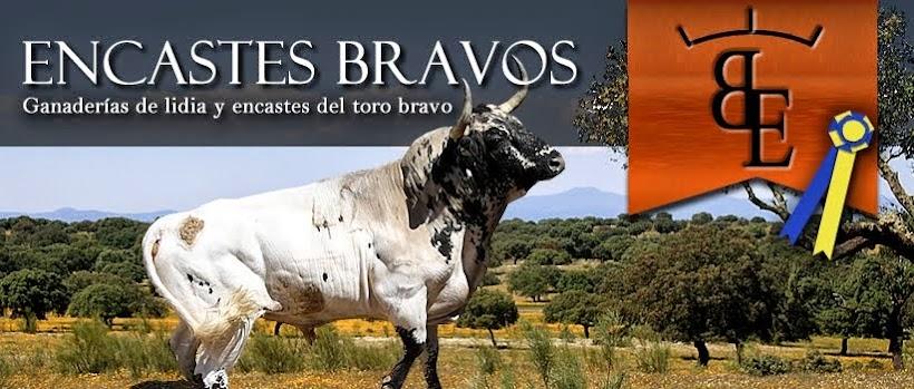 Encastes Bravos
