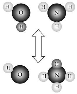 Pasangan konjugat asam basa: NH4 + dan NH3; H2O dan OH–.