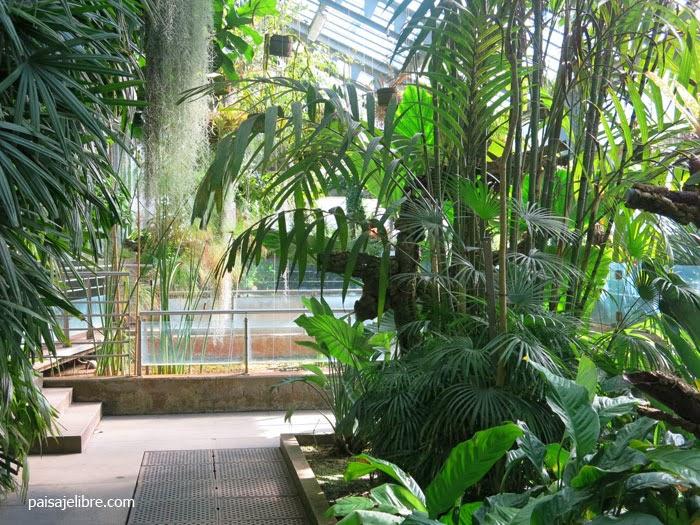 Invierno en el real jard n bot nico de madrid paisaje libre for Jardin botanico en sevilla