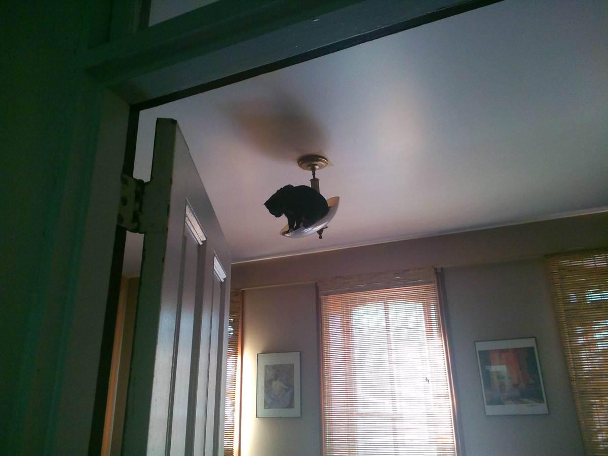 Сумасшедшие коты, фото 9