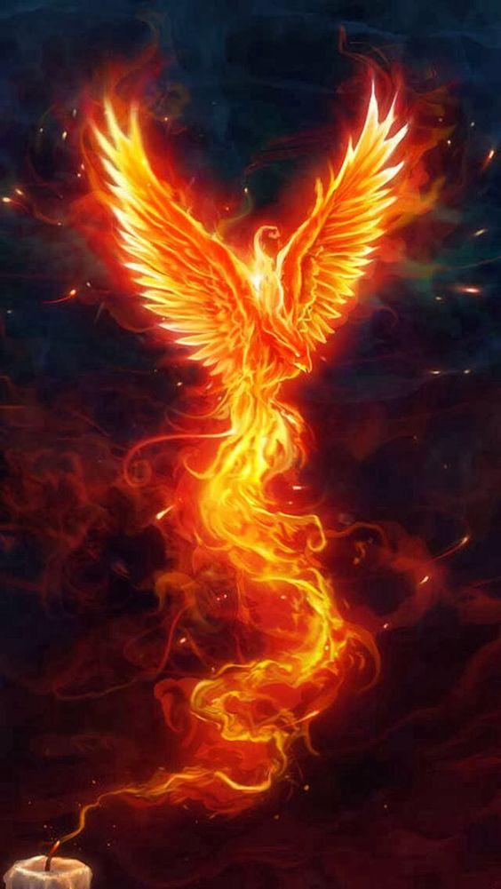 Phoenix rising...