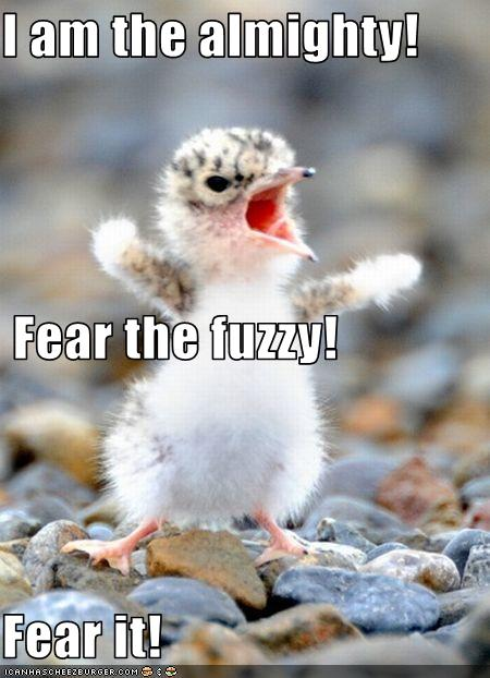 I am the almighty. Fear the Fuzzy. Fear it. Funny Animal Pics. No copyrights claimed