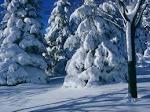 Téli látvány