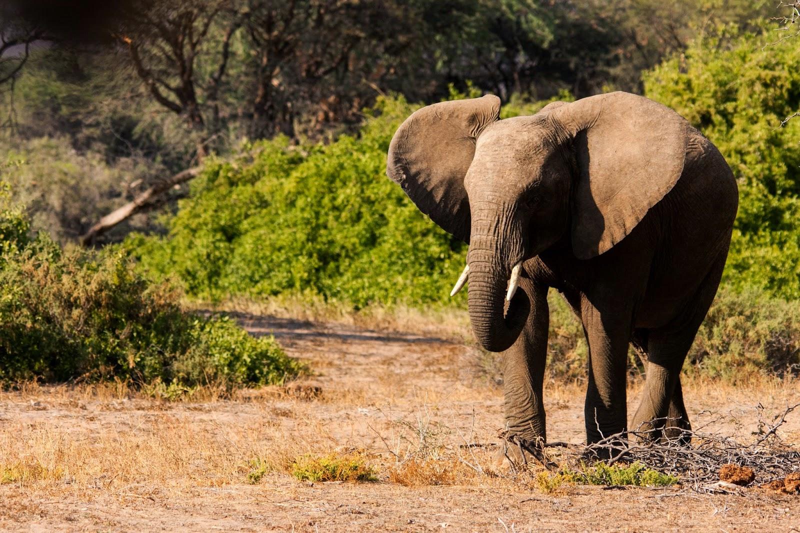 young bull damaraland namibia