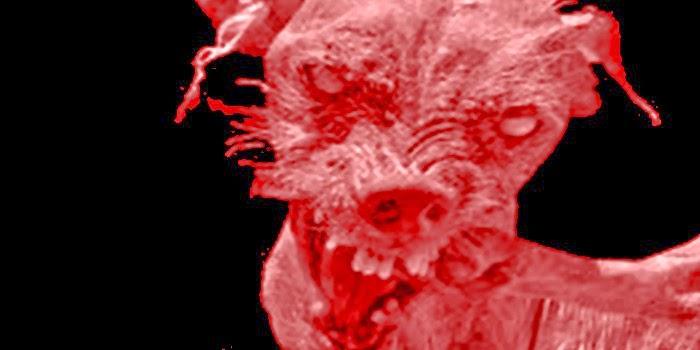 El horroroso perrito del aullido del terror
