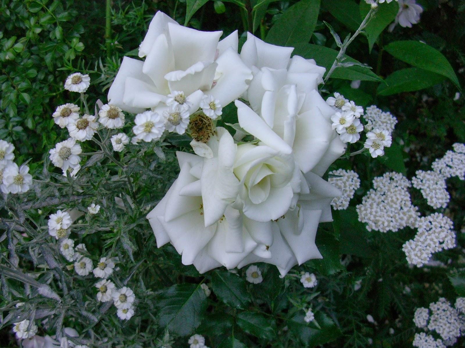 Un piccolo giardino in città: Fiori bianchi perchè...
