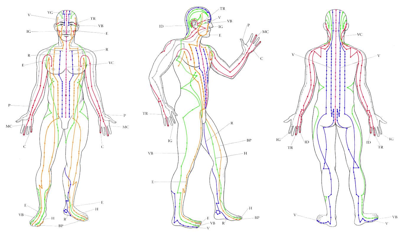 Anatomia do ser humano