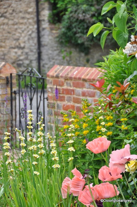 English Cottage Garden
