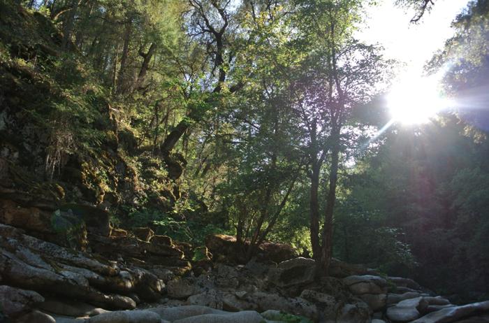 Tea With Hummingbirds California Adventure Swimming Holes