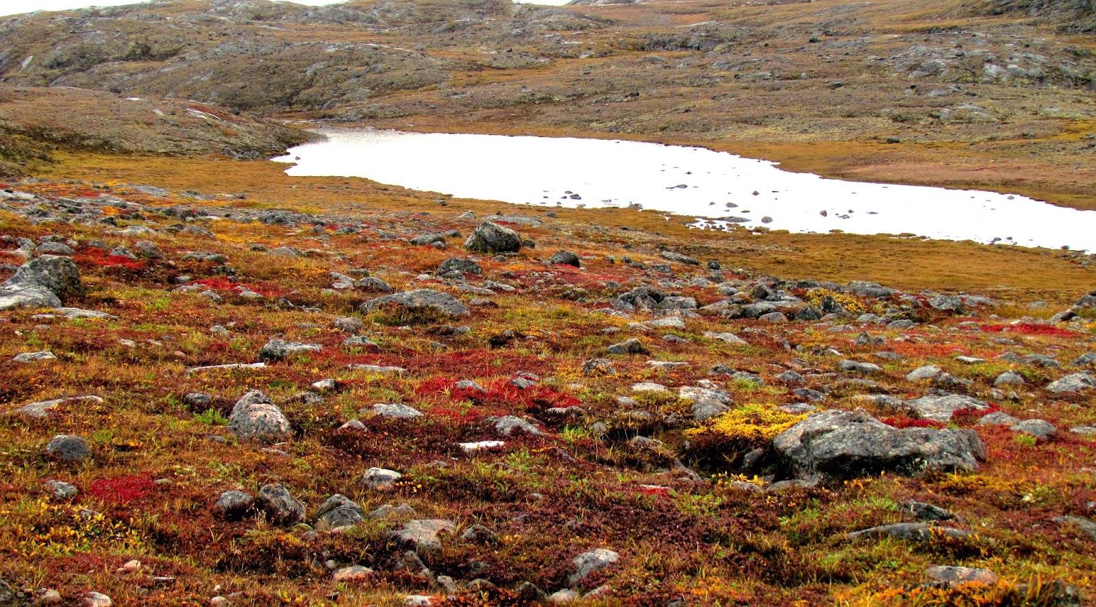dong-reu-tundra