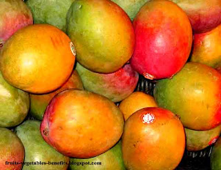 benefits_of_eating_mangos_fruits-vegetables-benefits.blogspot.com(benifits_of_eating_mangos(20)