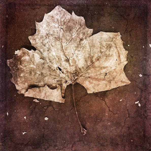 Fall Grunge © Geri Centonze
