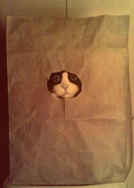 Gato metido en bolsa de cartón