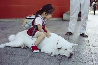 Funny Japanese Dog