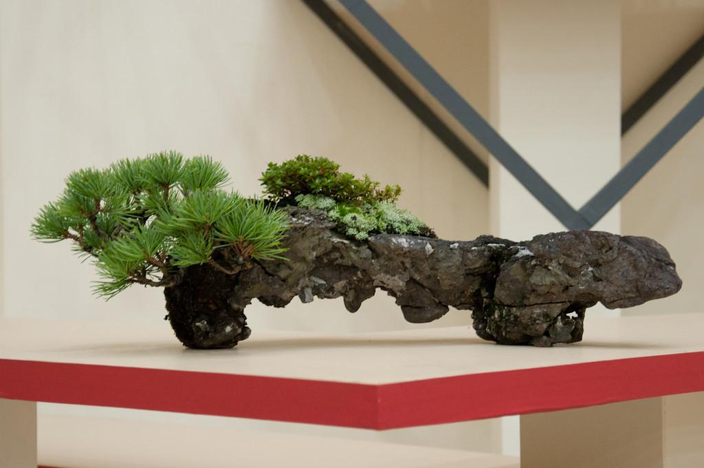 Great bonsai tree inspiration big little trees for Famous bonsai trees