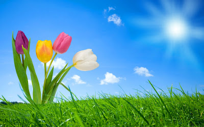 Sketeches of flowers spring nature Hd  Wallpapers