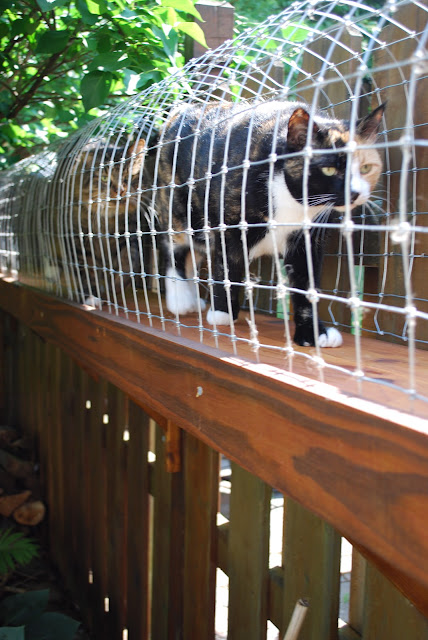 cats enjoying outdoor cat enclosures