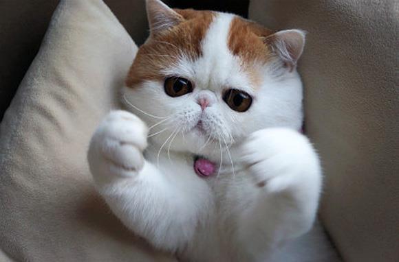 Indonesia Blogger Kumpulan Foto2 Kucing Cat Garfield