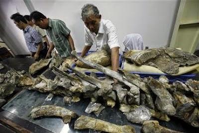 Gajah purba ditemukan lagi di Indonesia....!!!